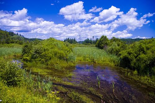 newbrunswick swamp wetlands marsh bog fen development saintjohn acap floodplain