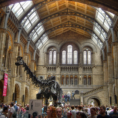 Dinosaurs in the Natural History museum by mikelo on Flickr.  Used through creative commons.