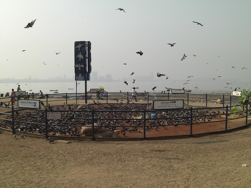 Pigeons at Chawpatty-Freedom