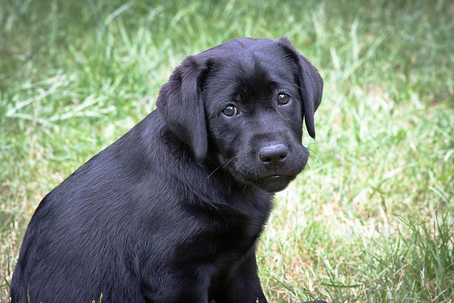 Most Inspiring Sad Black Adorable Dog - 5843023076_159ff65fda_z  Trends_3658  .jpg