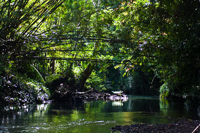 One Of The Beautiful Scenery At The Jungle Trek Flickr Photo Sharing