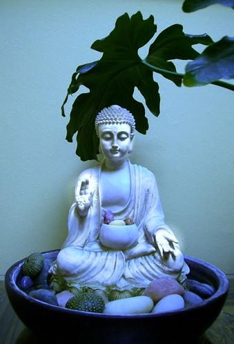 Buddha statue in the abhaya mudra, plant, rocks, sea urchin shells, bowl, Nelson, New Zealand by Wonderlane