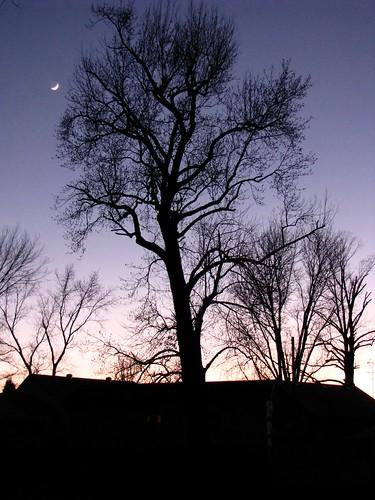 sunset moon tree silhouette