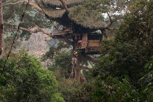 Christian Haugen's photo of a Gibbon Experience tree house.