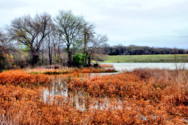 Dsc 0961 winter pond eubank ranch bog plants orange winter for Winter pond plants