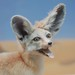 Small photo of Fennec Fox