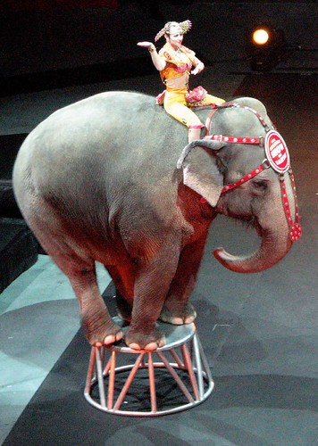 uno elefante by Jessie Pearl, on Flickr