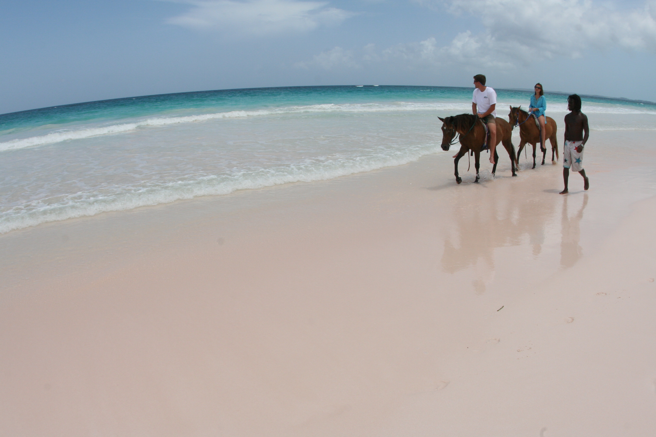 Horseback riding on harbour island famous pink sand beach for Pink sands beach in harbour islands