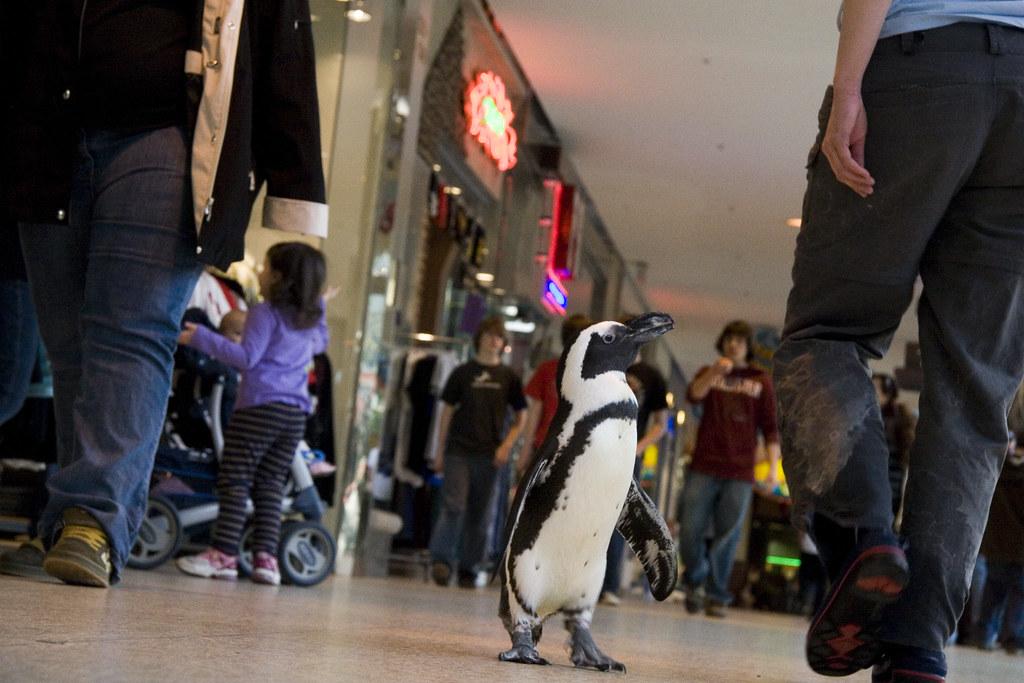 Colonie de pingouin au centre commercial d'Edmonton Est - Edmonton, Alberta, Canada