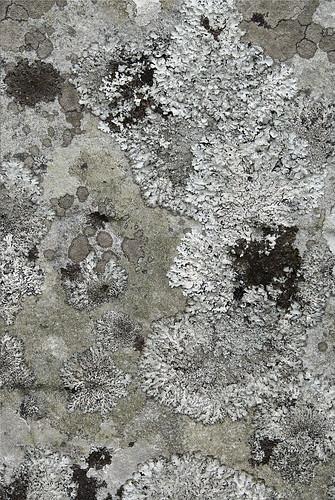 skye landscape scotland ruin lichen churchyard kilchrist cillchriosd