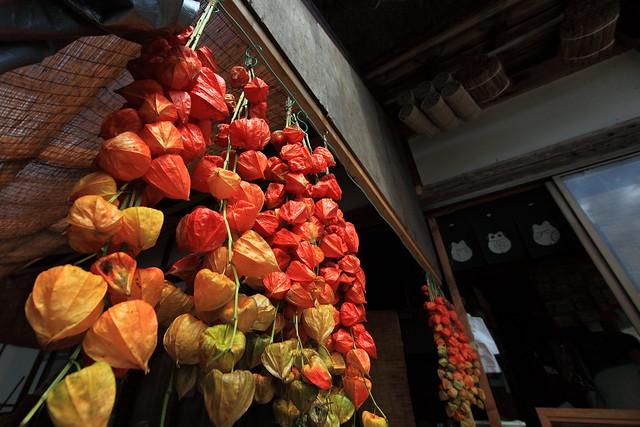 Chinese lantern plant / Physalis alkekengi / 鬼灯(ホオズキ)