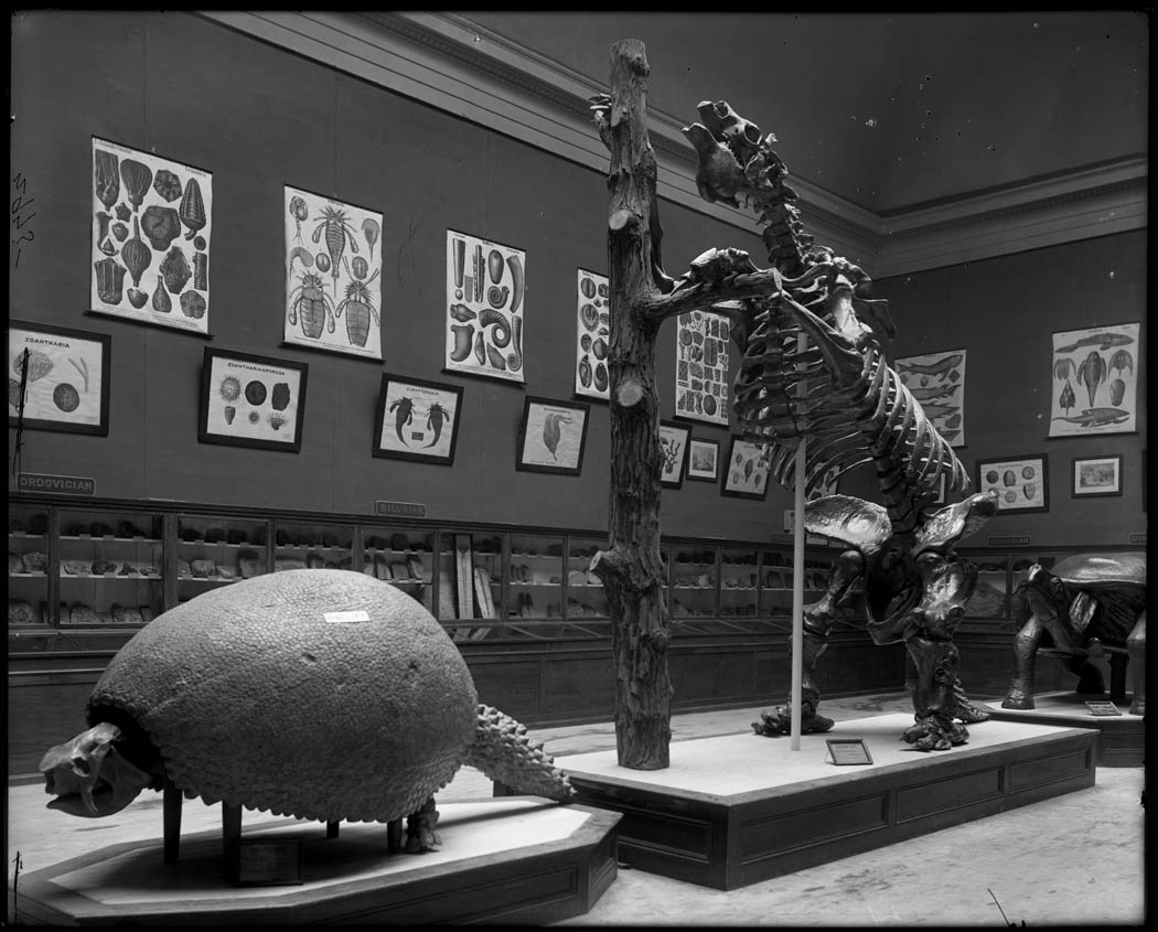 Mesozoic Fossils