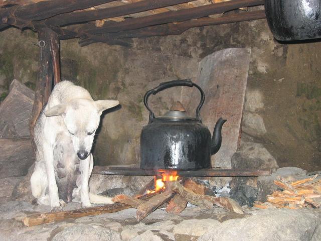 sad stray dog   Flickr - Photo Sharing!