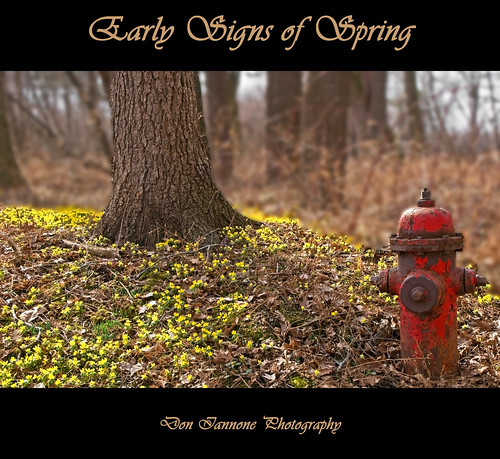 ohio nature spring poetry poem lakeerie explore firehydrant wildflowers preserve huron springtime doniannone sheldonnaturepreserve nikond80cameraflickr doniannonephotrography