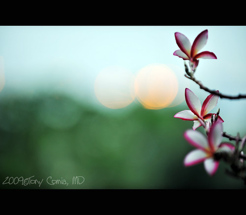 happy bokeh day everyone!