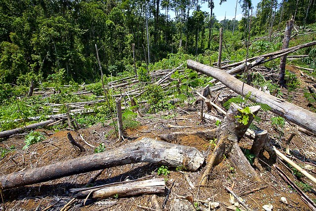 Deforestation and logging in Mindanao  Photo courtesy of Francesco Verinesi