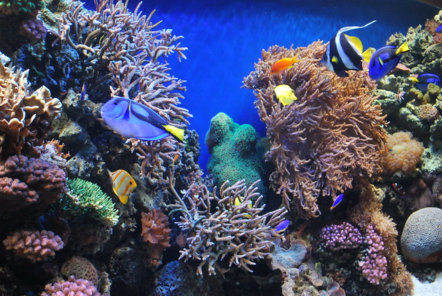 finding nemo coral reef - photo #27