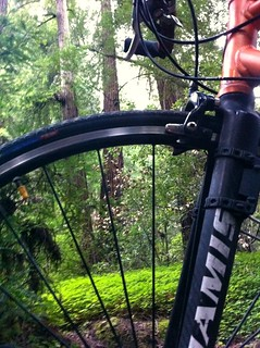 Biking to the forest