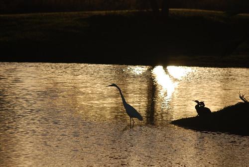 sunset heron mexico pond ducks tamaulipas estanque puestadesol itesm altamira patos garza winnr thegoldproject campustampico