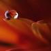 Drop.. by M. Al-Furaih Photography ©