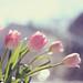 Spring? by Kristybee aka NoddingViolet