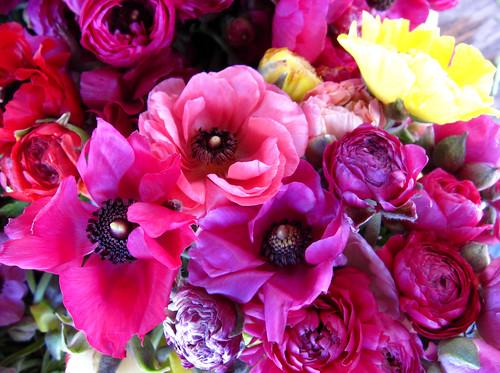 organic spring flowers