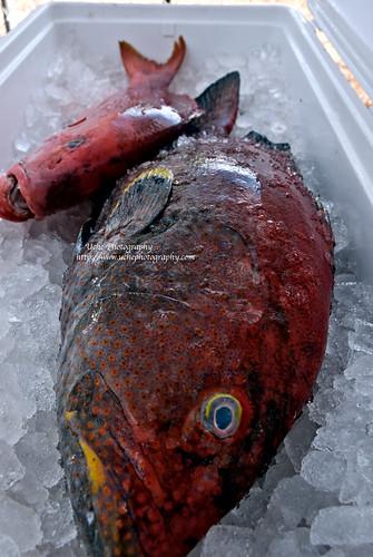 270/365alt coolest fish I ever photographed