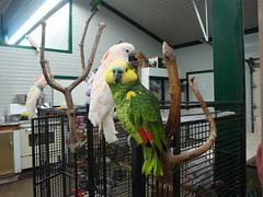 World Parrot Refuge