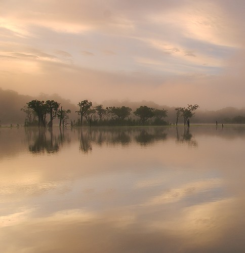 brazil mist sunrise amazon