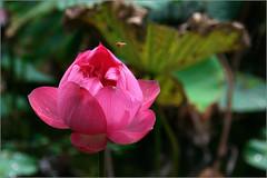 Various Flowers *