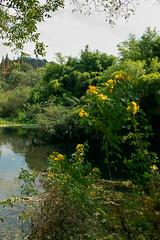 花溪公园的湿地