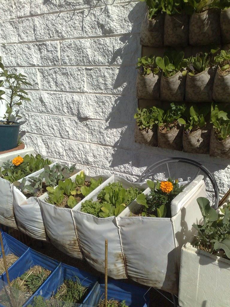 vertical garden sept | my rabbit-proof gardens | kate henshaw | Flickr