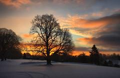 Schenley Sunrise