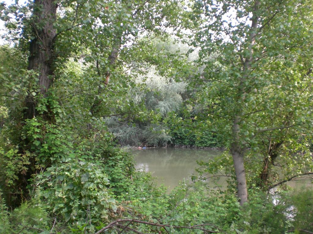 Río Jarama entre Vegetación