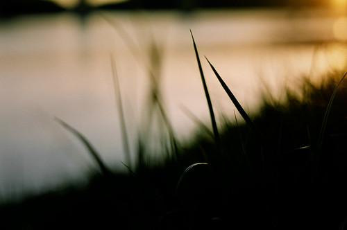 sunset canada film grass river edmonton asahi pentax takumar bokeh sp alberta solo m42 spotmatic 100 agfa northsaskatchewanriver dcf 11450mm supermulticoated
