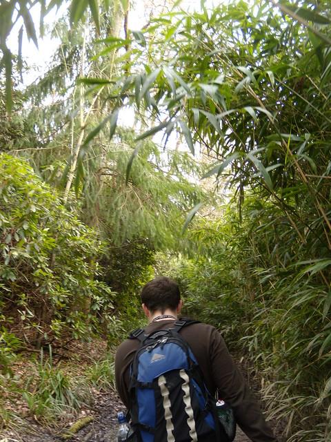 Through a jungle