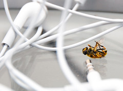 Wired Wasp