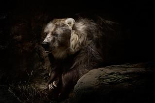 bear_002