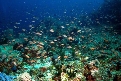 菲律賓阿尼洛保護區,洪聖雯提供。