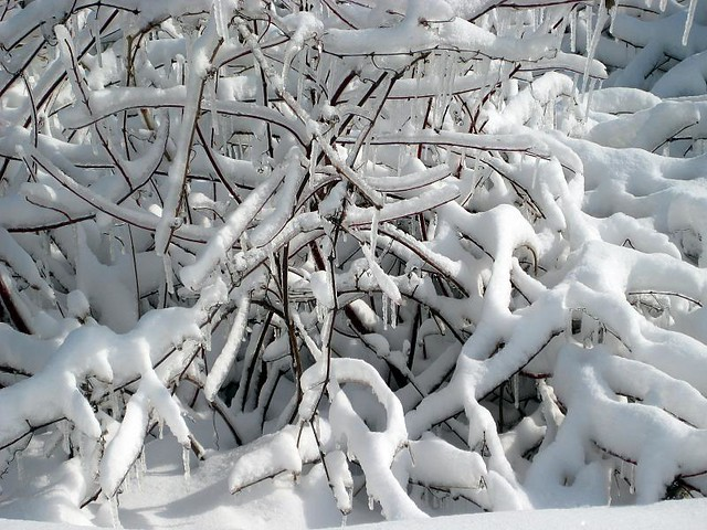 Niagara Falls 51 Frozen Trees With Snow By Royal Olive Flickr Photo Sharing