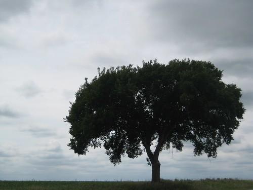Beautiful lone tree