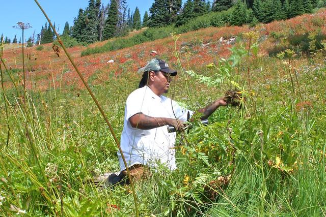 Nez Perce root gathering