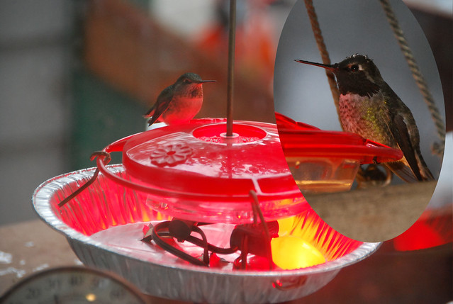 Hummingbird Feeder Heater