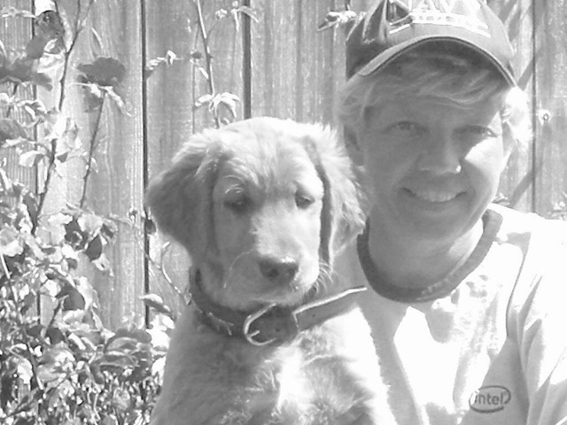 Image Result For Waterfowl Dog Training