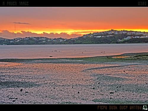 ocean sunset newzealand sky sun beach clouds reflections geotagged bay swan explore swans inlet frontpage blackswan hdr blackswans mywinners pautahanui tomraven aravenimage q309 geo:lat=41094844 geo:lon=174898653
