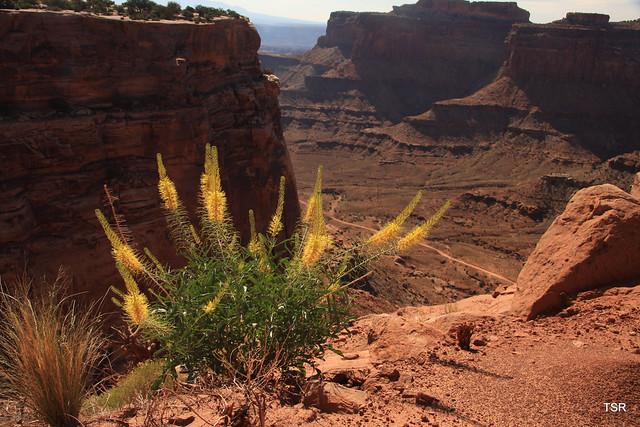 Shafer canyon trail Canyonlands