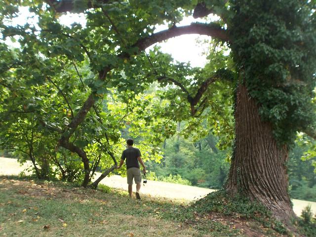 a tree runner