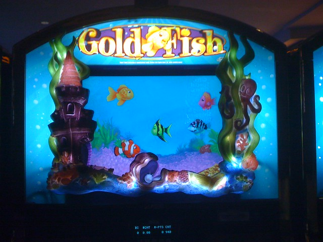 gold fish slot machine flickr photo sharing