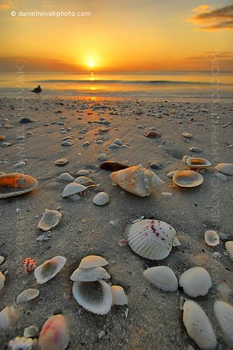 ocean sunset sun beach water mexico island sand december gulf florida shell marco 2008 sunsetsky sunsetcolors shellsonbeach