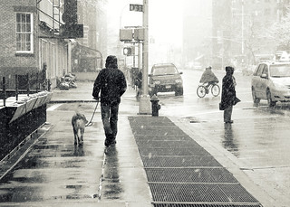 """Walking the dog on a snowy day"""
